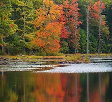 NH Foliage  by DrewK