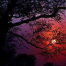 Kruger Dawn by Barry Feldman