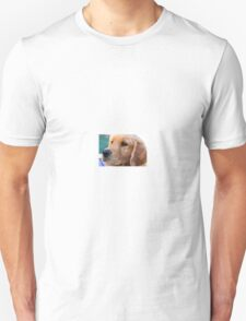 Man's Best Friend, Zorro T-Shirt