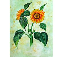 Vintage Sunflowers  Photographic Print