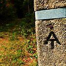 Appalachian Trail <3 by Andrea Morris