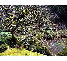 Japanese Gardens Portland, OR. Photographic Print
