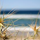 Beach Grasses by Jen  Hutchison