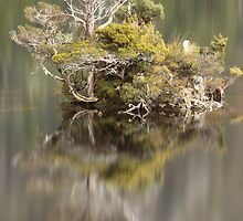 Dove Lake , Cradle Mt , Tasmania , Australia by phillip wise