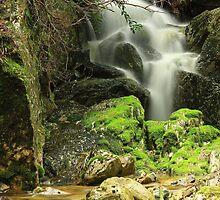 Ballroom Forest Falls, Cradle Mt , Tasmania , Australia by phillip wise