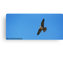 Hobby in action Canvas Print