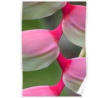 Exotic Charm - Sexy Pink Heliconia Poster