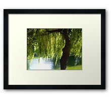 Willow tree by the canal Framed Print