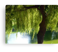 Willow tree by the canal Canvas Print