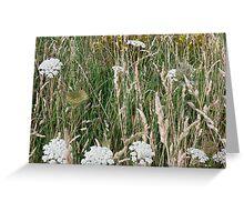 Yarrow in the meadow Greeting Card