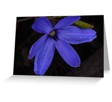 wild blue Laxmanniaceae Greeting Card