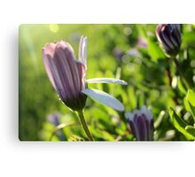 Flower Flare Canvas Print