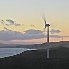 Albany windfarm by Anthony 'Bones' Dryden