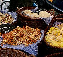 Fungi Diversity by patjila