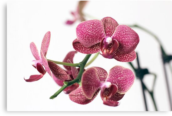 Assorted orchid by Richard Laschon