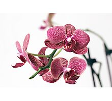Assorted orchid Photographic Print