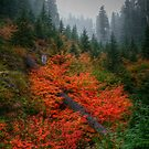 A Sea Of Red by Charles &amp; Patricia   Harkins ~ Picture Oregon