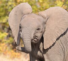 Elephant Calf by jeff97