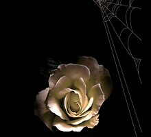 Moonlit Rose iPhone by patjila