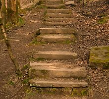 Woodland Steps by Epicurian