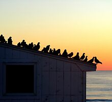 Pigeons awaiting the morning sun by Samohsong