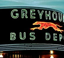 Greyhound by Victoria Buck