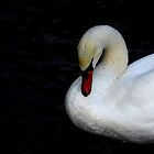 swan by Nicole W.