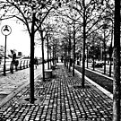 Dublin in Mono: Autumn Walk by Denise Abé
