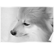 Maverick Little Fox 1 Poster