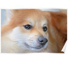 Maverick Little Fox 2 Poster
