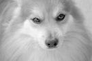 Maverick Little Fox 4 by ©Dawne M. Dunton