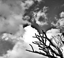 Dublin in Mono: Shining In The Sky by Denise Abé