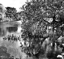 Dublin in Mono: Still Waters by Denise Abé