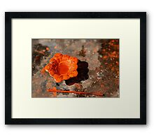 Orange Flower Framed Print