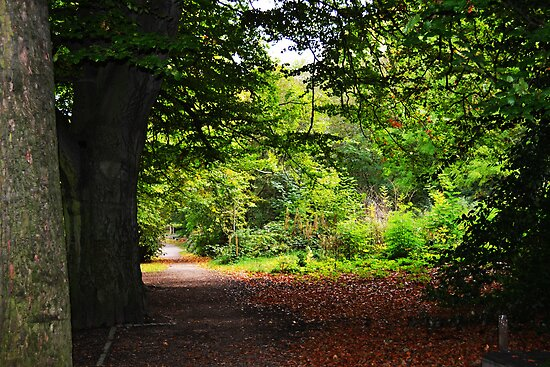 Autumn wilderness by bobbykim666