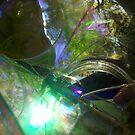 Sheens of green by Jimmy Joe