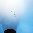 Fly By by Paul Kavsak
