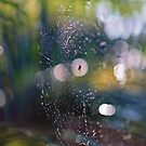 Spiders Web 3 by Cheryl Styles