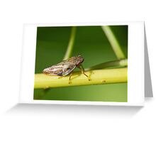 Froghopper on Stem Greeting Card