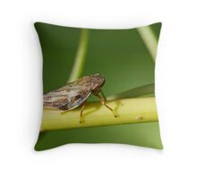 Froghopper on Stem Throw Pillow