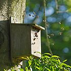 Bumblebees in Bird Nest Box by Sue Robinson