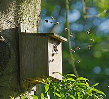 Bumblebees in Bird Nest Box by Sue Robinson