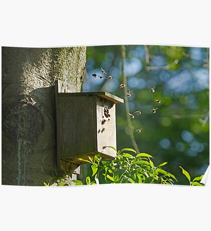 Bumblebees in Bird Nest Box Poster
