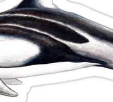 Pacific white-sided dolphin Sticker