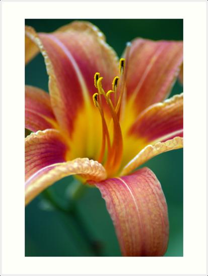Flower by Dan Phelps