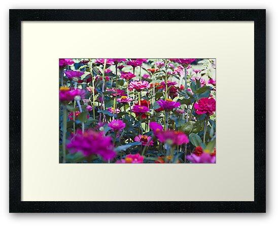 Flower Field by Dan Phelps