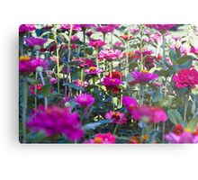 Flower Field Metal Print