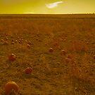 Pumpkin Gold by Jordan Selha
