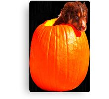 Puppy in a Pumpkin! Canvas Print