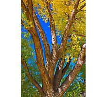 Beautiful Blue Sky Autumn Day Photographic Print